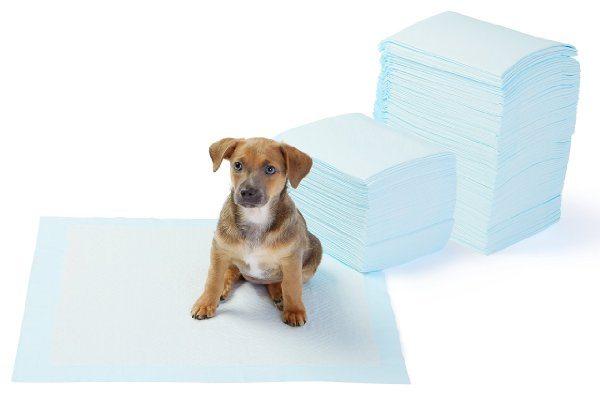 AmazonBasics - Toallitas de entrenamiento para mascotas